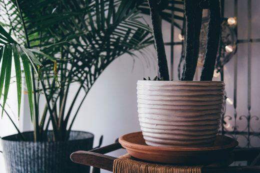 Des plantes en pot dans un décor intérieur chaleureux